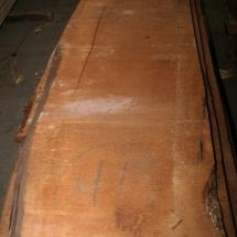 Kauri-Planke_011