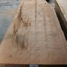 Kauri-Planke_041