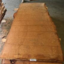 Kauri-Planke_076